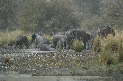 bale-elephants